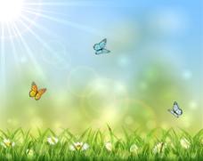 阳光下的草从