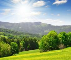 草地树林高山风景图片图片