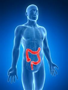人体大肠器官图片