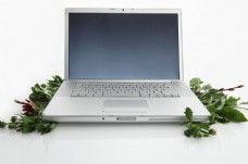 绿叶和笔记本电脑特写图片