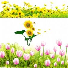 郁金香 向日葵