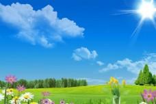 藍天草地花朵