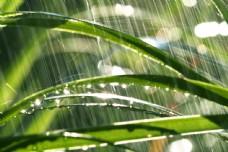雨中的绿草图片