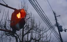 日本红绿灯