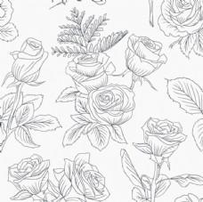 手绘春季玫瑰花线稿插图