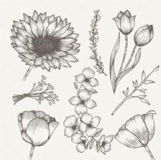 手绘素描春季花卉元素