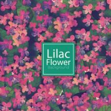 春季紫色花朵背景