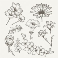 手绘素描春季花卉素材