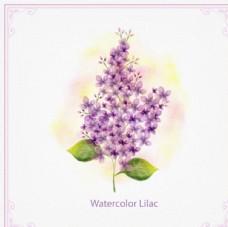 手绘水彩春季紫色花卉