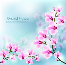 朦胧背景春季樱花插图