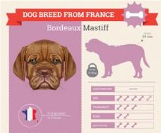小狗的血统和各种属性介绍展示模板