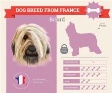 小狗血统和各种属性介绍展示模板