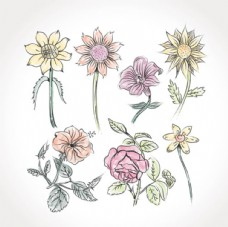 手绘水粉春季花卉插图