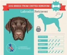 各类狗的血统和各种属性介绍展示模板