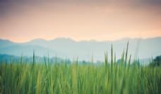 梦幻童话背景绿草