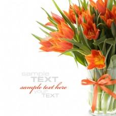 橙色花朵图片