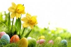草地上的彩蛋和鲜花图片