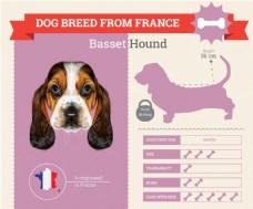 小狗的血统和各种属性介绍广告模板