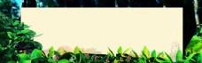 树叶banner背景