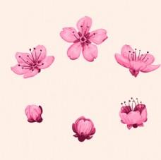 手绘春季樱花盛开过程