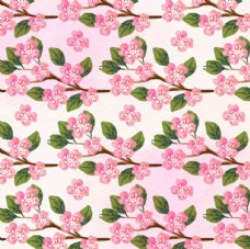 四方连续手绘春季樱花背景