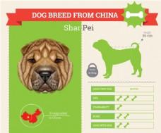 沙皮狗的血统和各种属性介绍展示模板