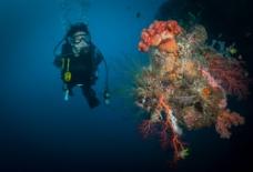珊瑚与潜水员图片
