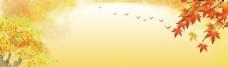黄色枫叶大雁树木背景