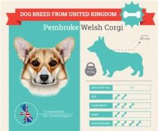 来自英国的狗种介绍展示