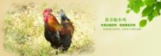 家禽banner图片
