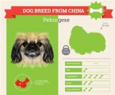 小狗狗的血统和各种属性介绍展示模板