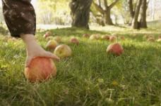 拾苹果的手图片