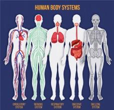 5款彩绘人体系统平面图矢量素材