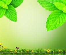 绿叶水面背景