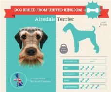 各类小狗的血统和各种属性介绍展示模板