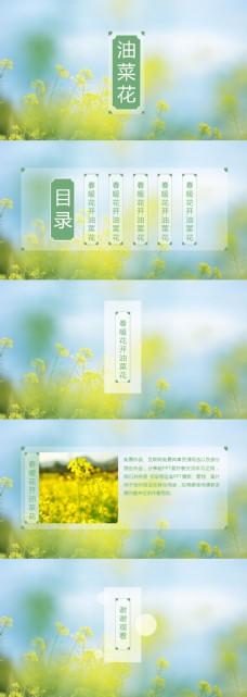淡雅清新自然油菜花ppt模板