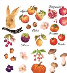 兔子南瓜日常蔬菜水果