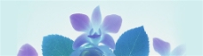 紫色鲜花背景图片