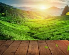 绿色叶子主图背景