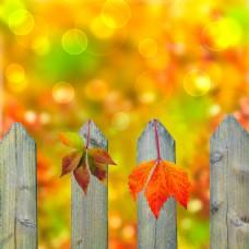 围栏上的树叶图片