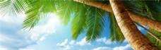 阳光下的椰子树banner