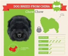 小黑狗的血统和各种属性介绍展示模板