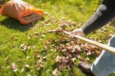 清扫草地上的枯叶图片