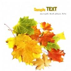 秋天树叶摄影图片