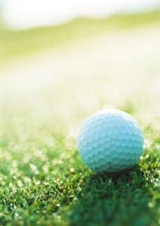 绿草地上的高尔夫球图片