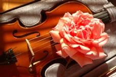 小提琴与花朵图片