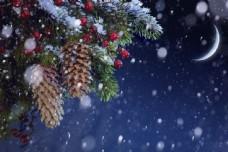 圣诞树与梦幻背景图片