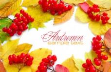 水果与树叶背景图片