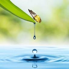 滴水的绿叶和蝴蝶图片