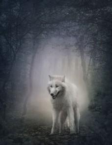 树林里的狼图片